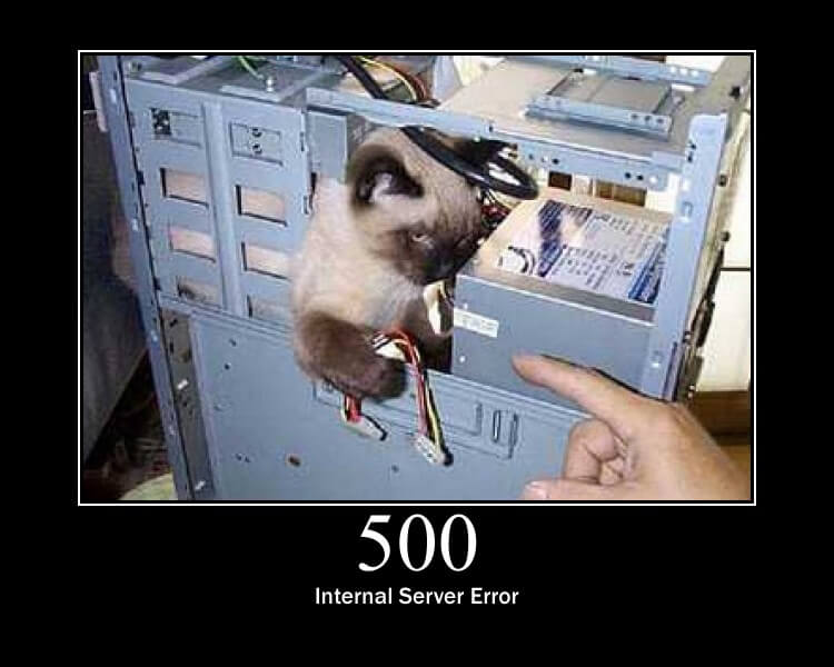 http statuscode 500 as a cat picture