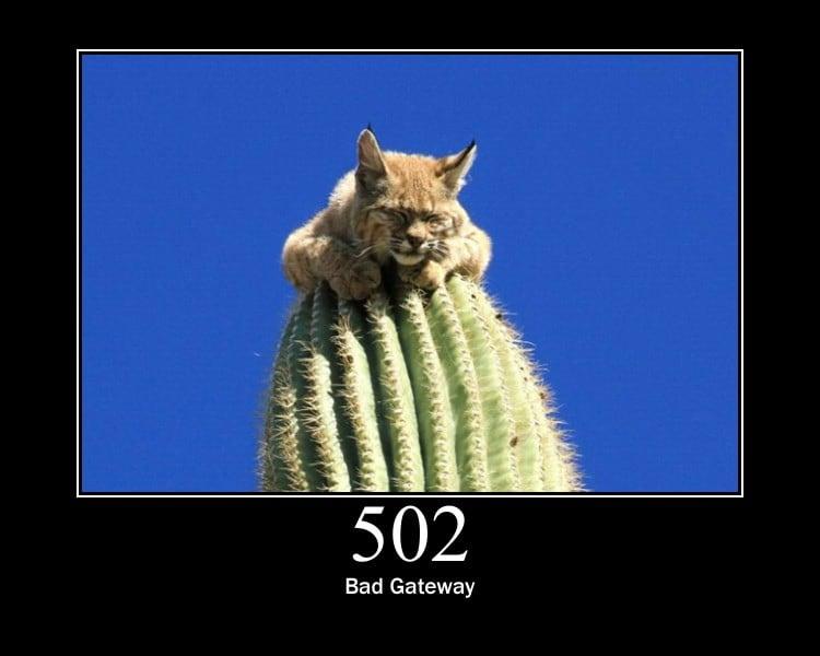 http://httpcats.herokuapp.com/502.jpg